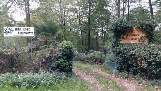 Jungle Garden Karlostachys: IMG_20181023_114602936_large.jpg