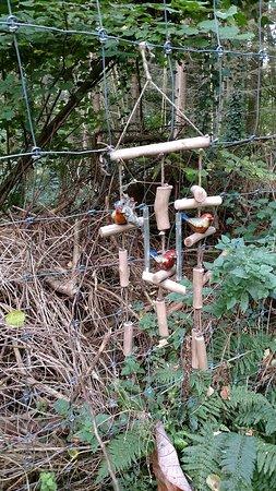 Jungle Garden Karlostachys: IMG_20181023_103209747_large.jpg