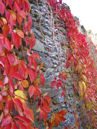 Hardegg, Rakousko: Podzimní barvy