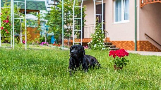 Двор Гостевой Дом Таврический Guest House Tavrichesky