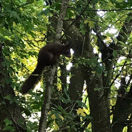 Wildwood Escot: photo0.jpg