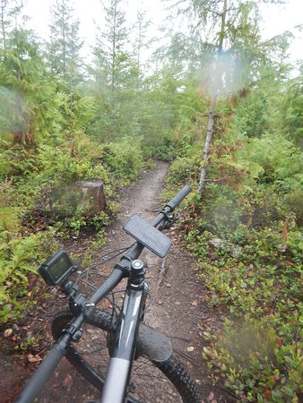 Cumberland Forest Mountain Bike Trails