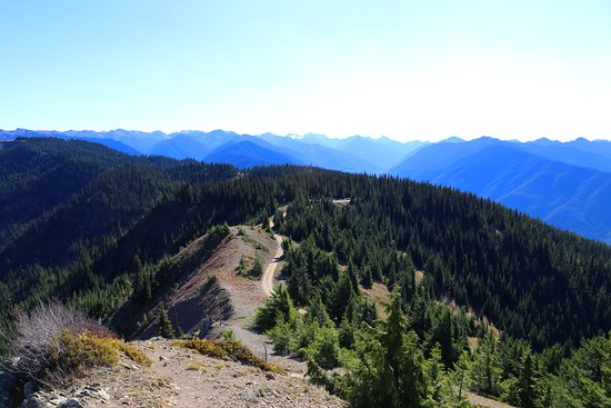 Hurricane Ridge 사진