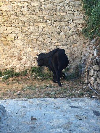 Evisa, Frankrike: Le Taureau
