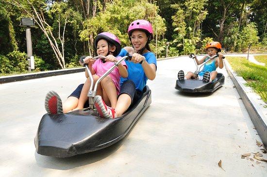 Pulau Sentosa, Singapura: Luge