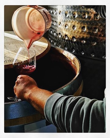 Cortona, Italien: Tasting new wine 2018