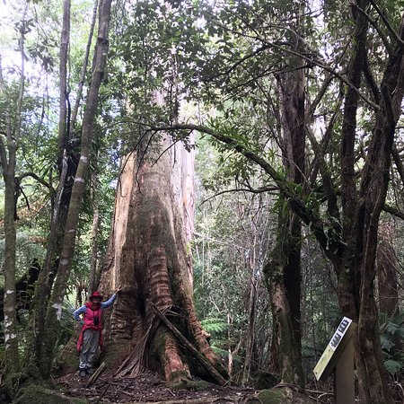 One of the best rainforest walks in Oz