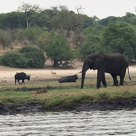 Chobe National Park Photo