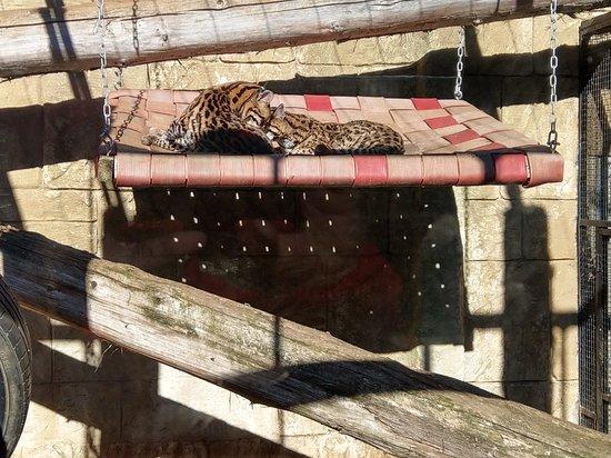 Amazon World Zoo Park: IMAG1169_large.jpg