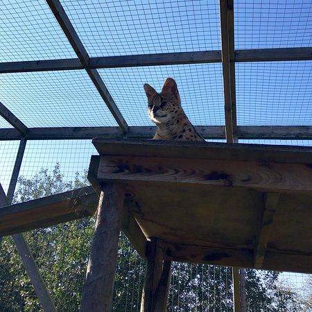 Hoo Farm Animal Kingdom: photo0.jpg