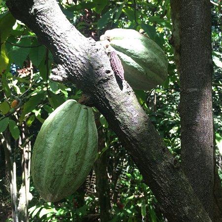 La Maison du Cacao: photo2.jpg