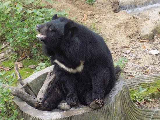 Black Bear basking