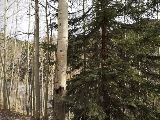 Red Cliff, CO: IMG_20181024_120554_2_large.jpg