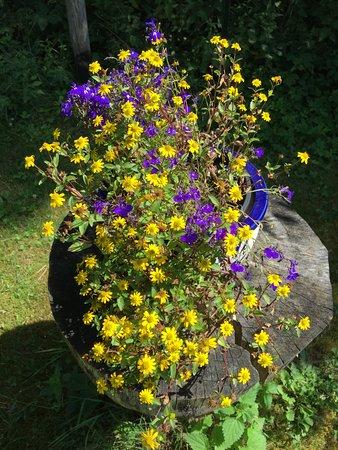 Dargen, Deutschland: Im Kräutergarten