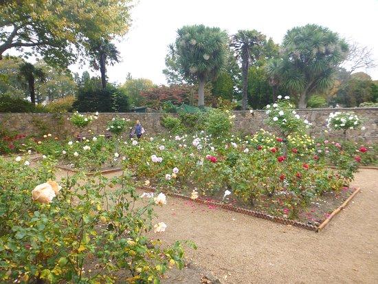 rose garden walkabout