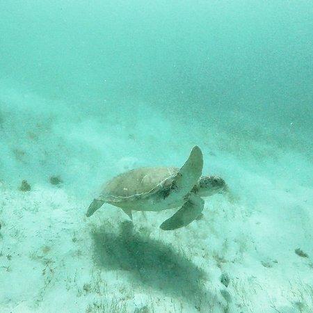 More snorkeling!
