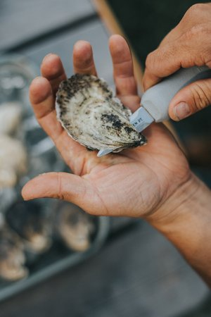 Glidden Point Oyster Farms: Shuck your own at Glidden Point!