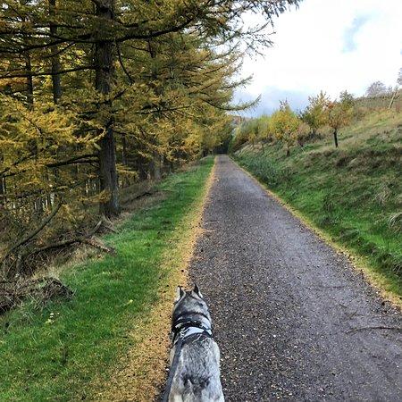 Amazing circular walk with dog