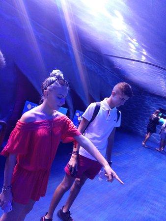 Дубайский аквариум и подводный зоопарк: dubai aquarium