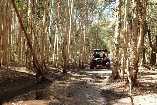 Gold Coast Island Buggy Tours 사진