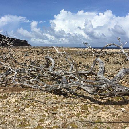 Bonaire National Marine Park: photo1.jpg