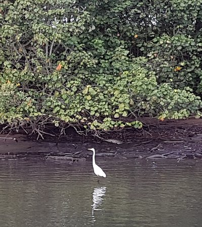 Mount Warning River Tours: One of the waterbirds on the Tweed river
