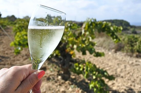Wine and Cava Tour from Barcelona...
