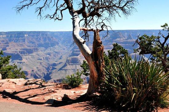 Excursão VIP ao Parque Nacional do...