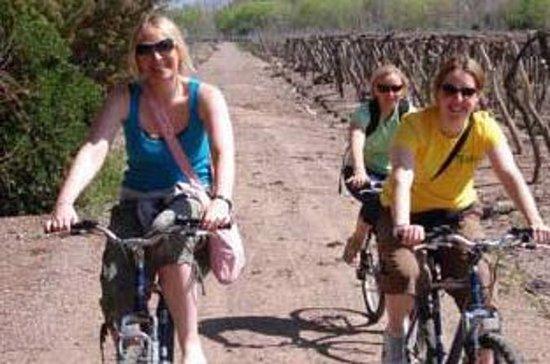 Fahrradtour in Mendoza Weinland