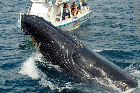 Excursão de observação de baleias na...