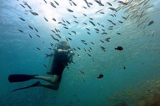 Koh Chang Dive Trip con 2 immersioni