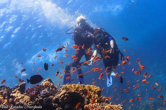 Red Sea Full-Day Introduktion til...
