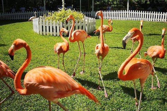 Ardastra Gardens, Zoo &amp...