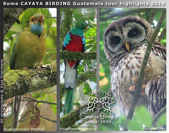 Cayaya Birding照片