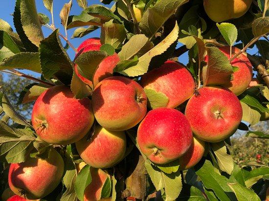 Frugtplantagen Karensminde