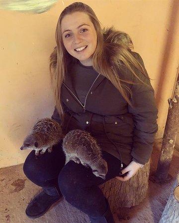 Hoo Farm Animal Kingdom: 🐵
