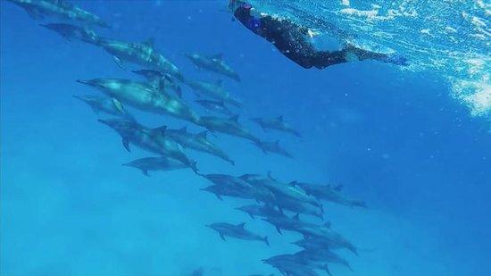 Splendid Red Sea Diving Holidays