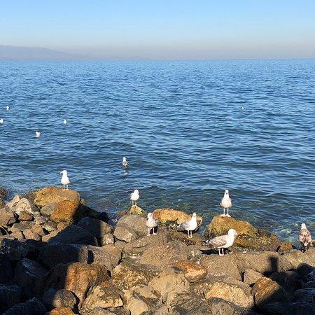 Guzelbahce, Tyrkia: photo0.jpg