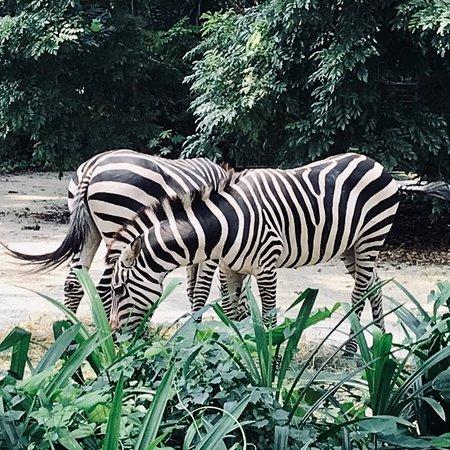 Mooie Zoo!