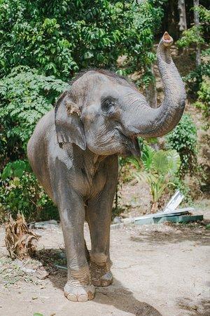 Elephant Care Park