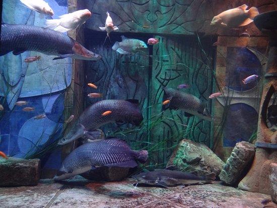 Дубайский аквариум и подводный зоопарк: Varieties