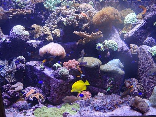 Дубайский аквариум и подводный зоопарк: Lovely fishes