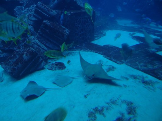 Дубайский аквариум и подводный зоопарк: And more fishes