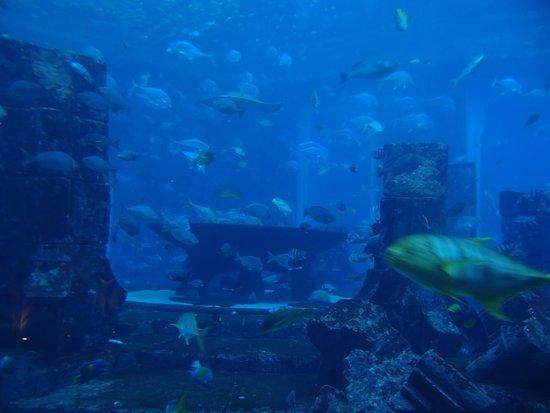 Дубайский аквариум и подводный зоопарк: The aquarium