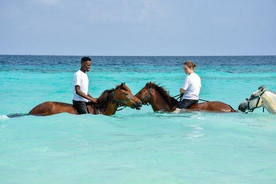 Zanzibar Horse Club