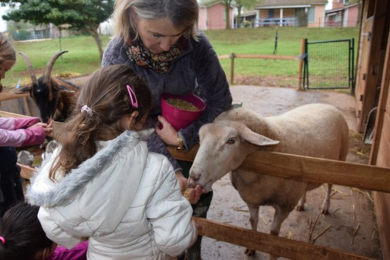 Montlaur, Γαλλία: Repas des animaux