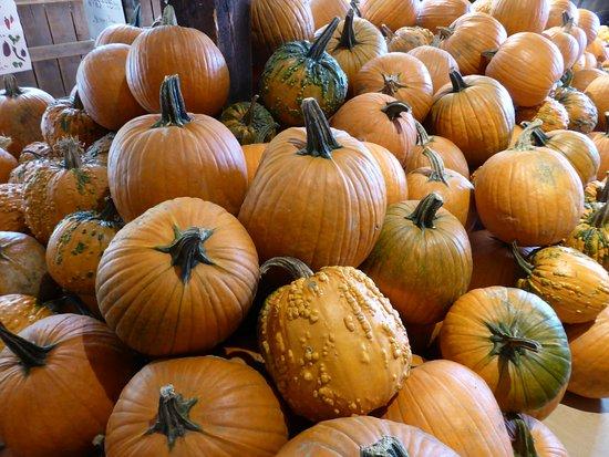 Newfane, VT: Pumpkins galore