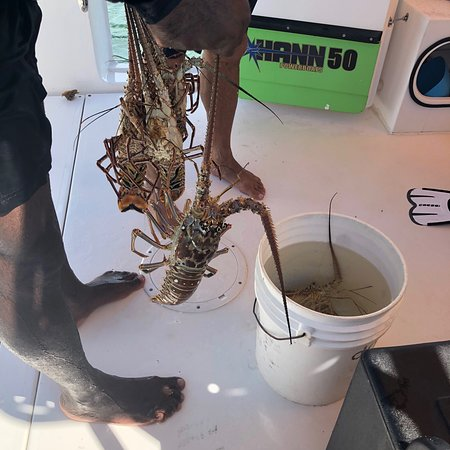 Ultimate Caicos experience