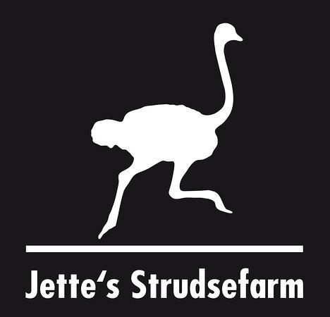 Ringkobing, Dinamarca: Jette's Straussenfarm