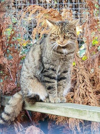 Heckmondwike, UK: Farm Cat :)
